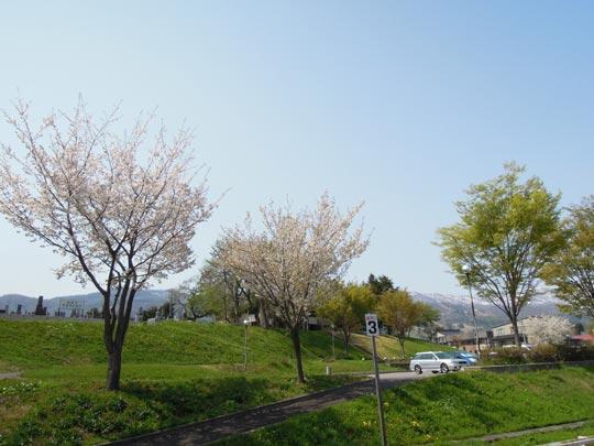 1306湯巡り飯山線沿いのサクラ.jpg